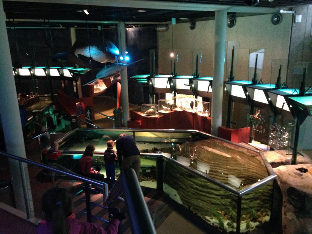 Een deel van het aquarium van Ecomare, van bovenaf gezien.