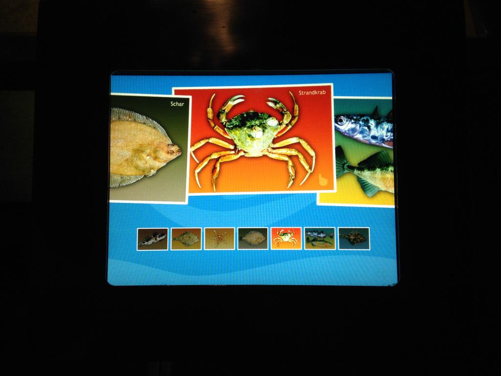 Informatie over de zeedieren.