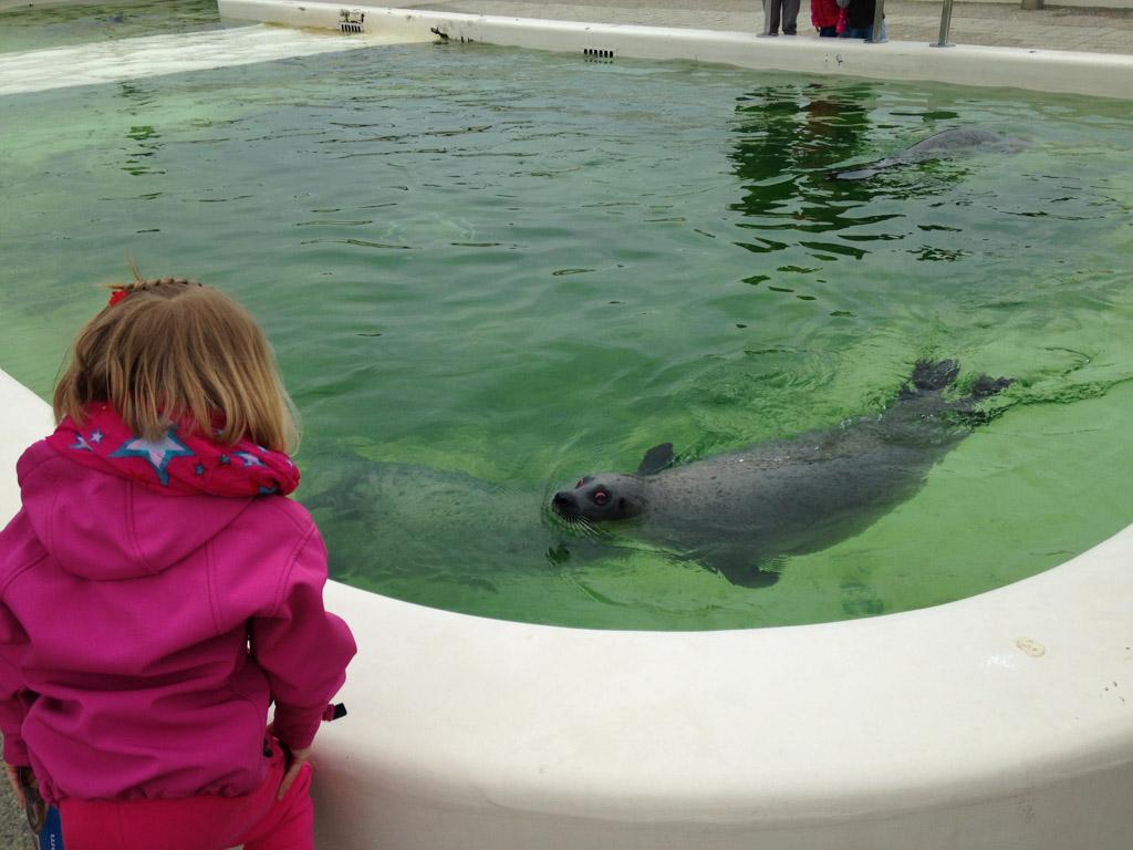 We kunnen de zeehonden goed zien.