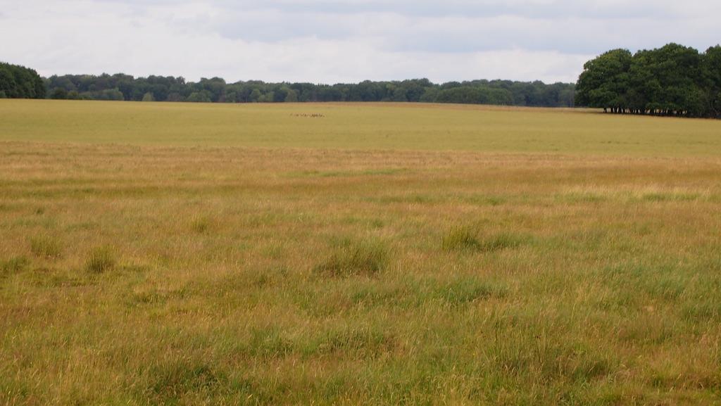 Ook in het open veld zien we groepjes reeën staan.