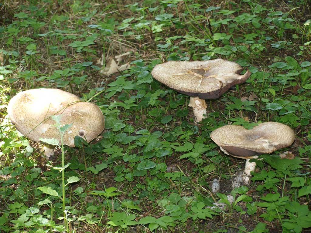 Paddenstoelen in het bos.