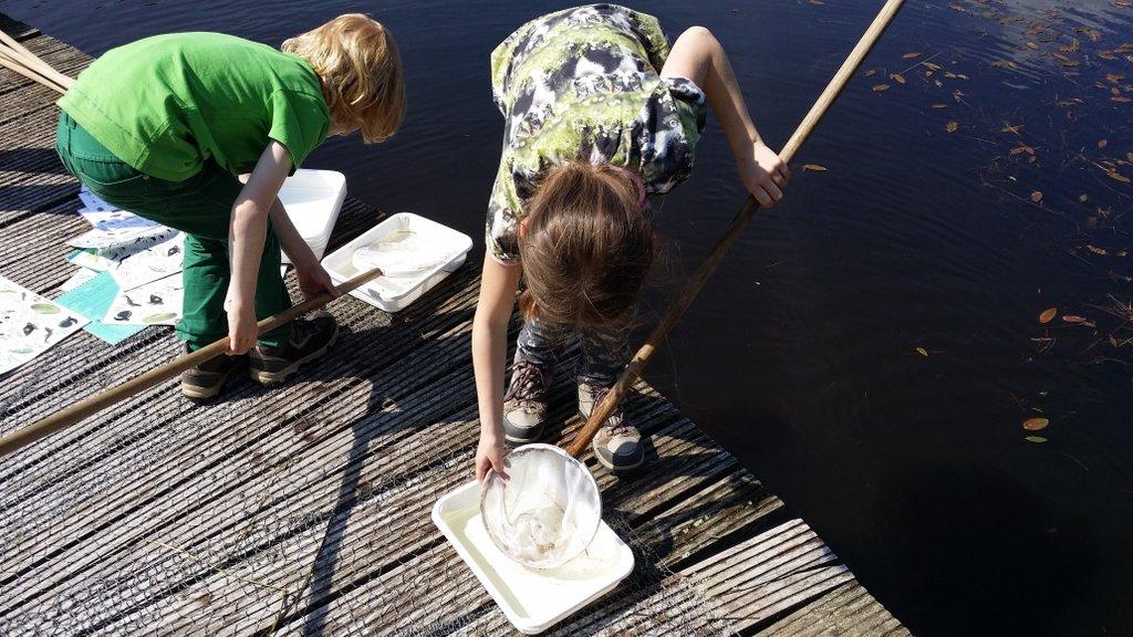 Waterdiertjes vangen en opzoeken.