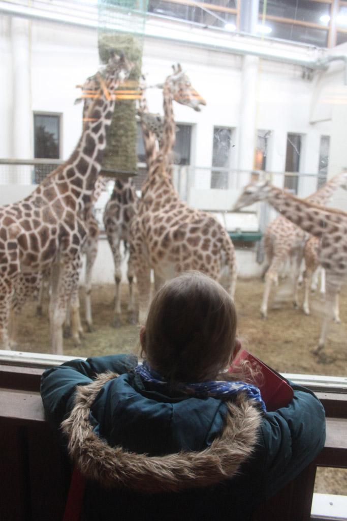 Dino dagen bij burgers zoo