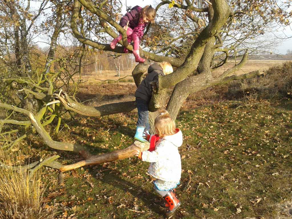 Geen boom te hoog!