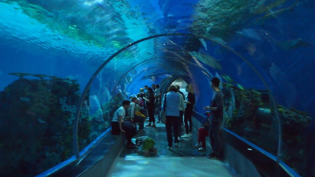 In de tunnel met zelfs een stuk glasbodem.