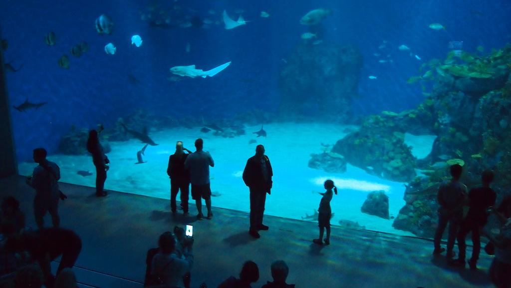 Het grootste aquarium.