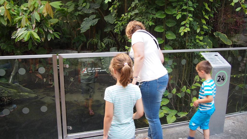 Voorzichtig over de rand gluren om de piranha's te bekijken.