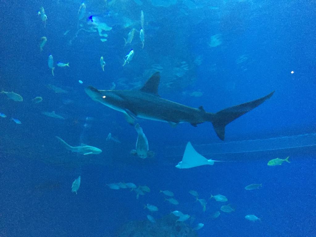 Haaien en roggen zwemmen langs en boven ons.