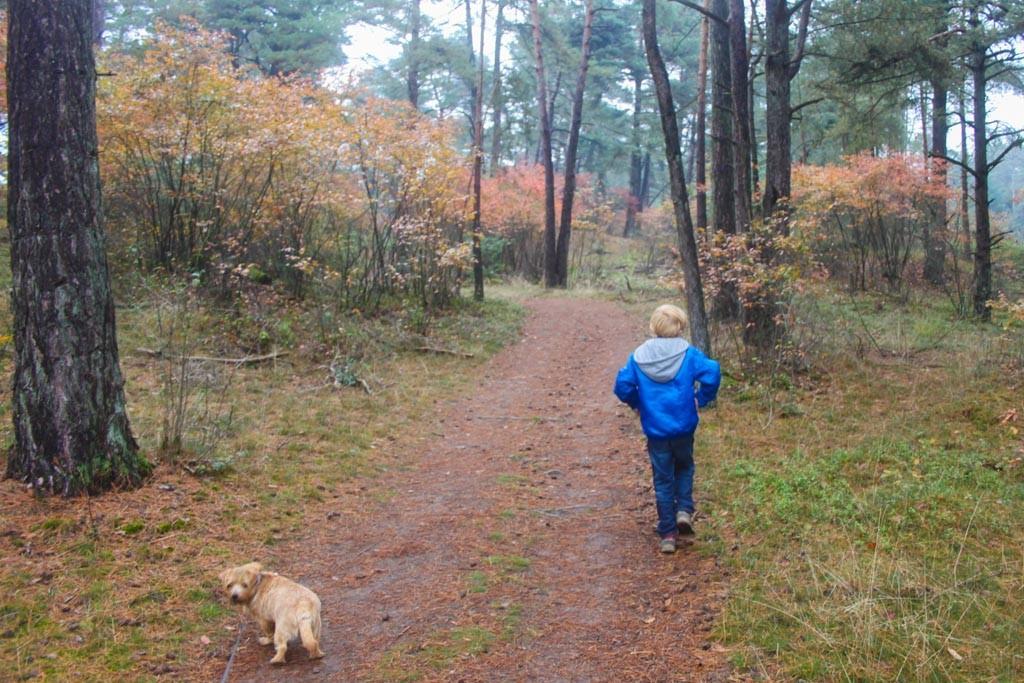 Het begin van de route gaat door een bos met veel dennenappels.
