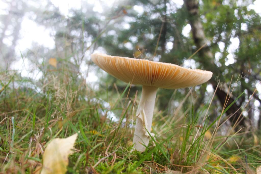 Voordeel van wandelen in de herfst, mooie paddestoelen.