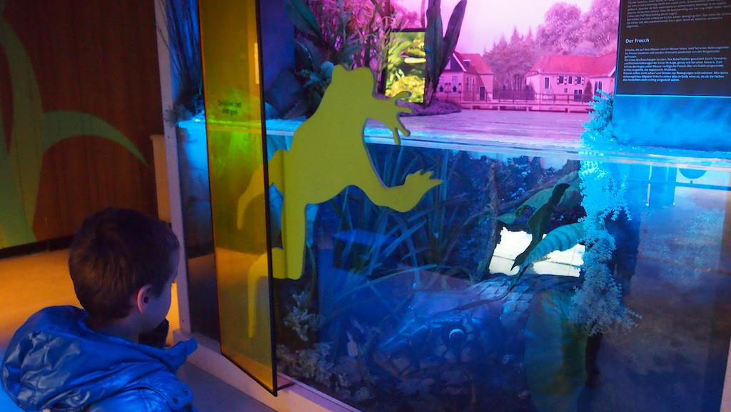 Hoe ziet een kikker? Kijk maar eens door het gele glas.