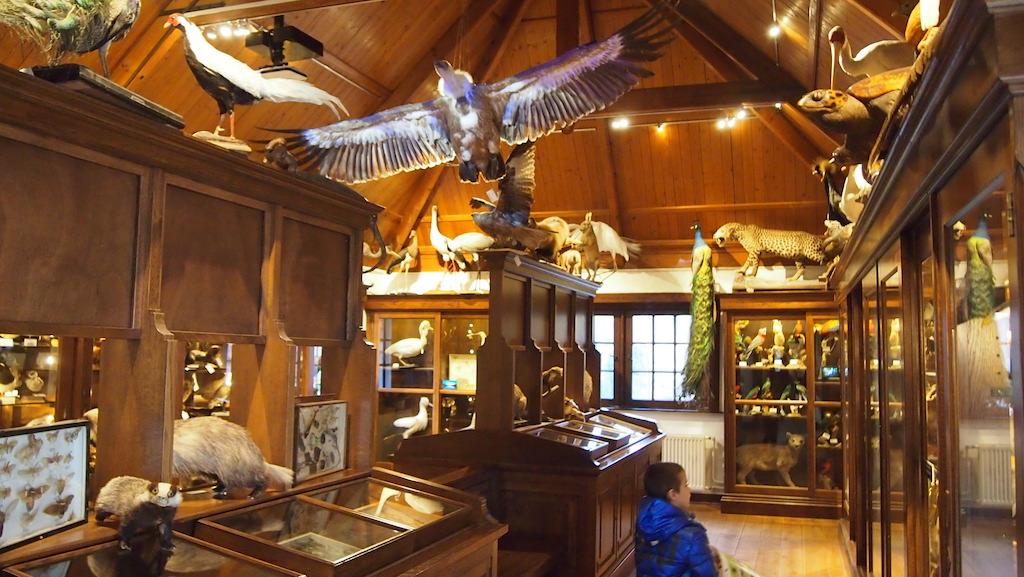 Opgezette dieren in een van de wonderkamers.