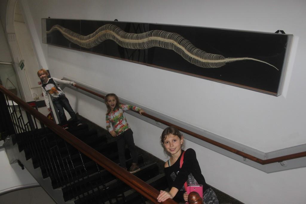 Zo lang kan een anaconda worden!