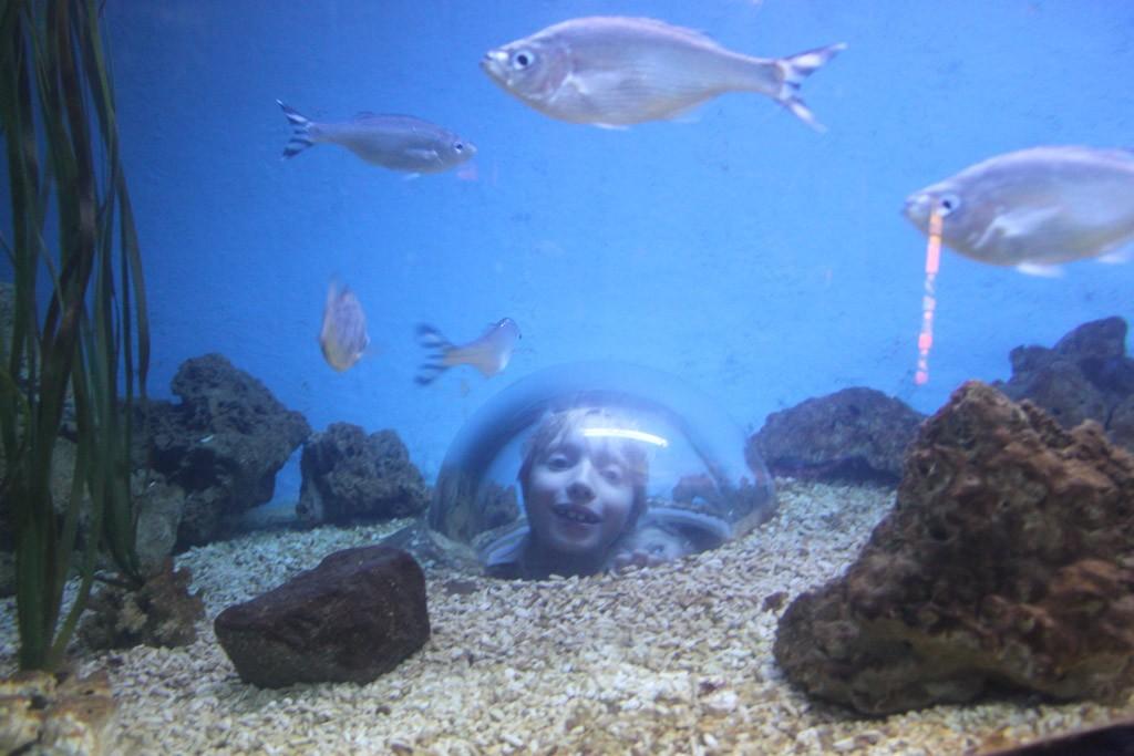 Meer leren over de onderwaterwereld in het Arsenaal.