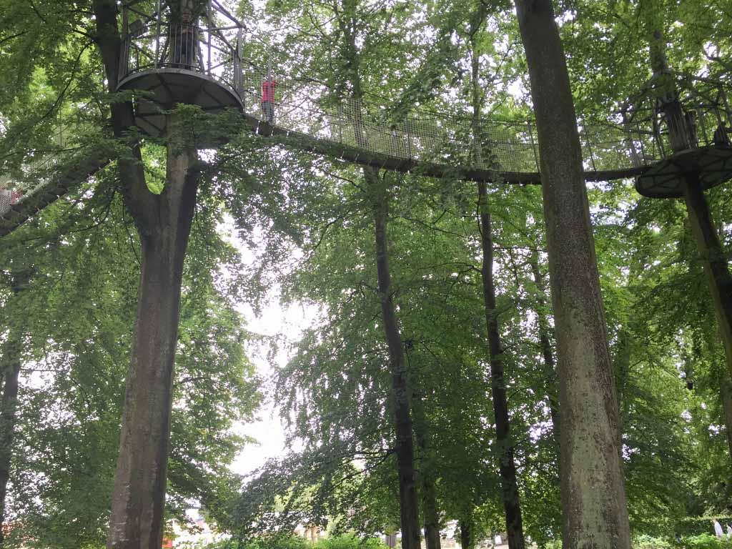 Hoog tussen de boomtoppen lopen.