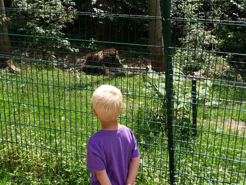 Wolf- en Berenpark.