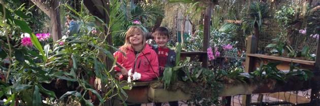 Is de Orchideeën Hoeve in de Flevopolder ook leuk voor kinderen?