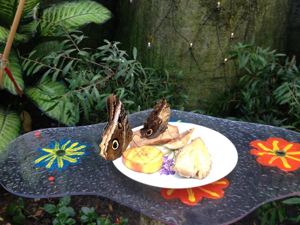 Smullende vlinders.