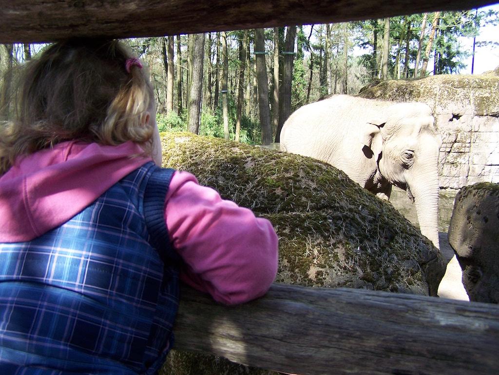 Olifanten kijken bij Burgers' Zoo.