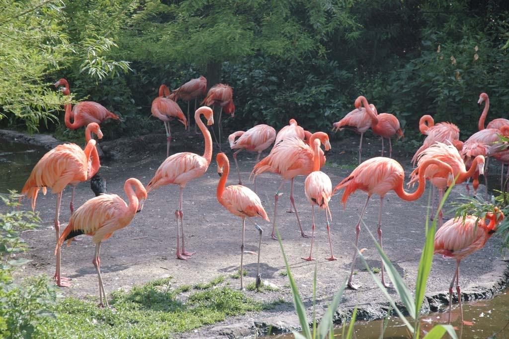 Mooie flamingo's.