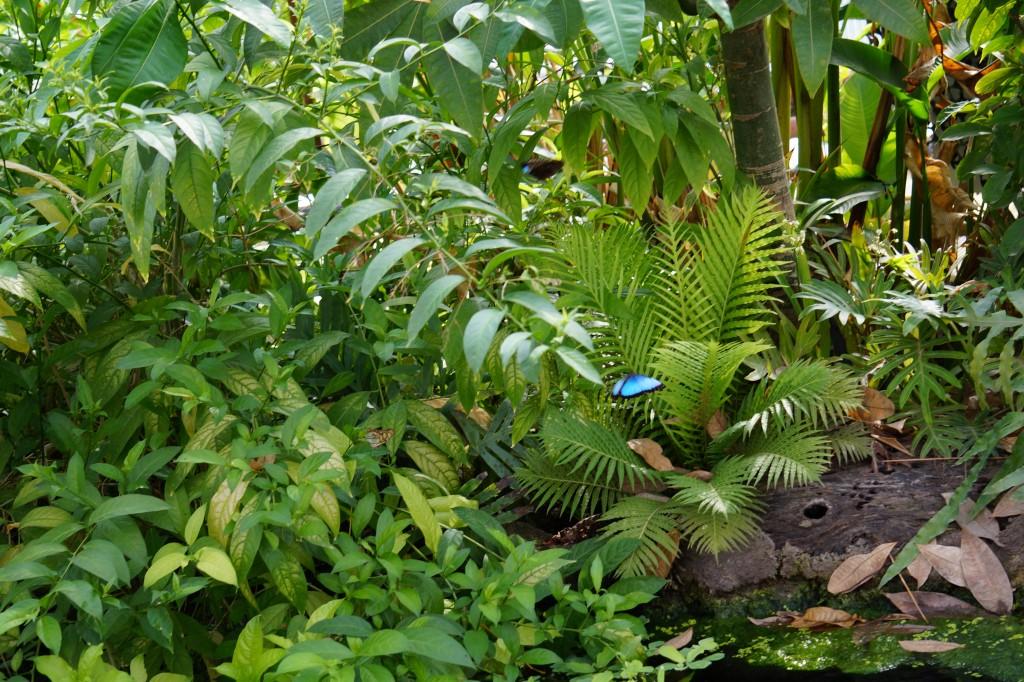 Amazonica, het groene regenwoud.