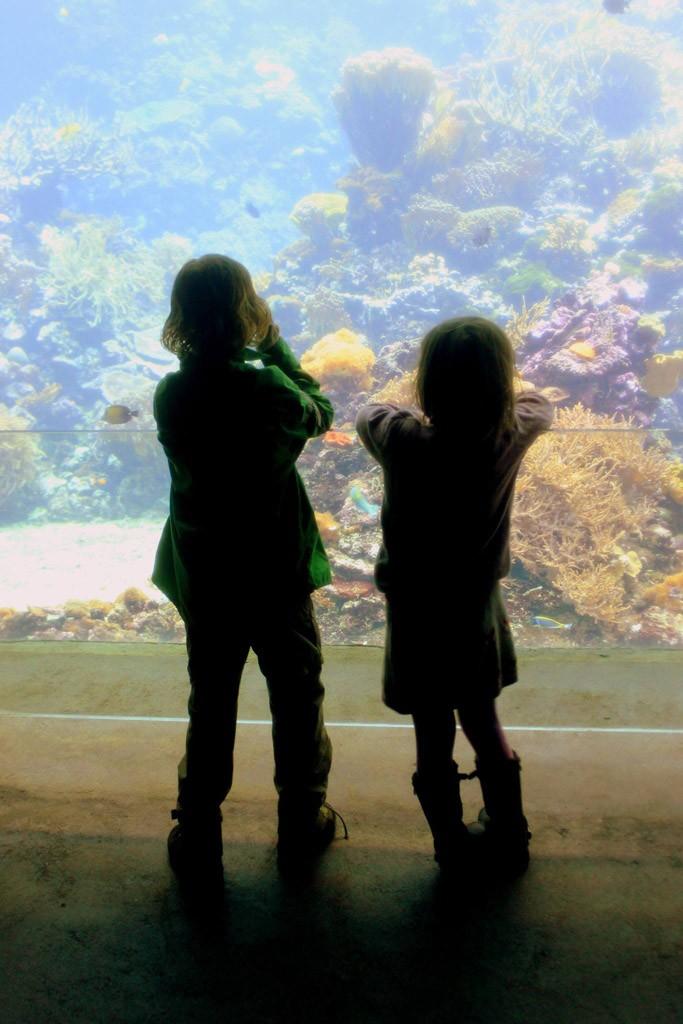 Genieten van de wereld onder water.