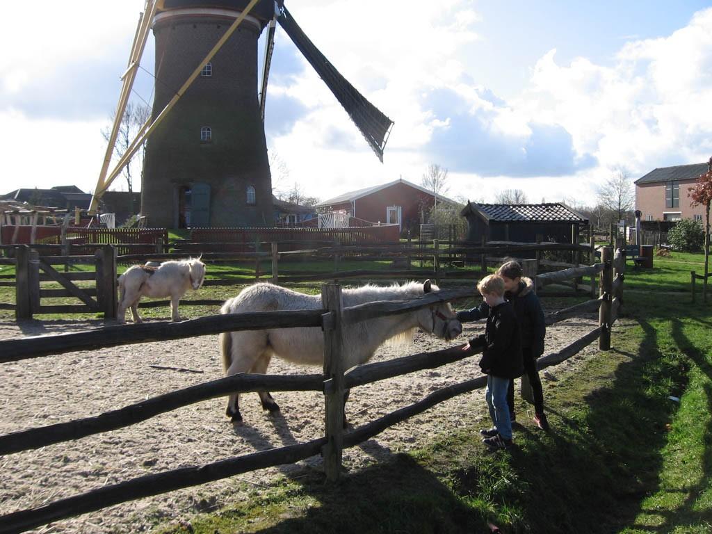 Pony's aaien.