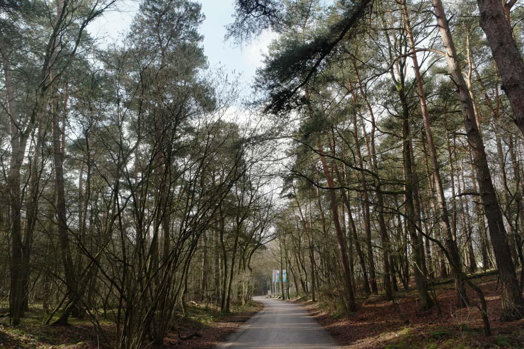 De omgeving: bos!
