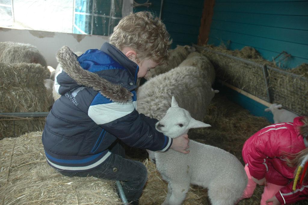 Lammetjes knuffelen.