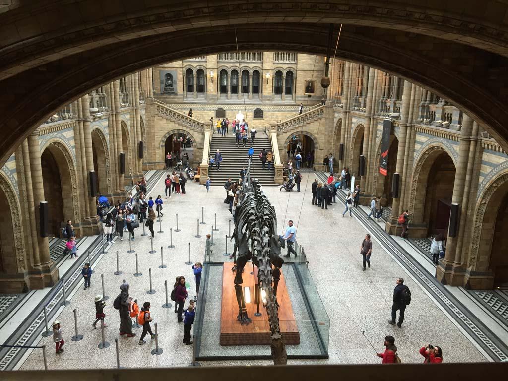 De imposante dinosaurus in de centrale hal van het National History Museum.