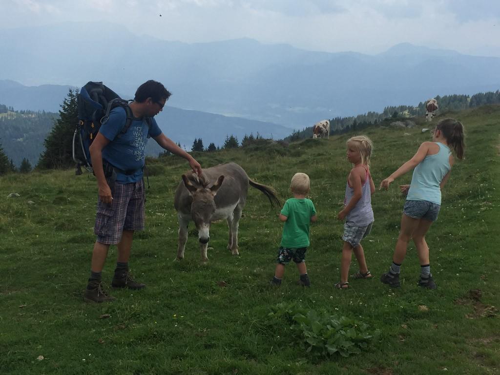 De ezels boven op de berg.