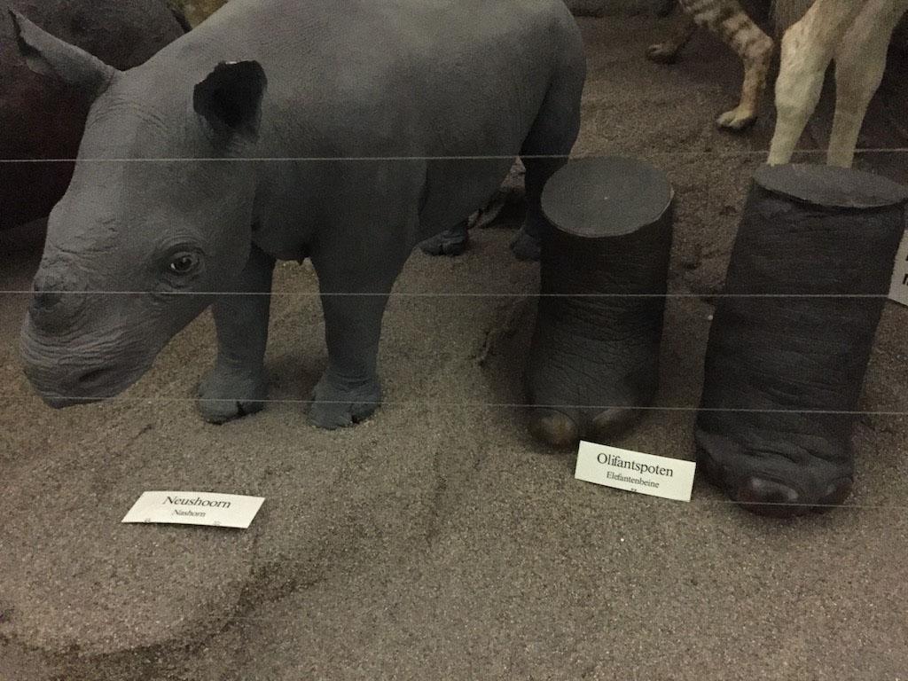Ondertussen zie ik opeens twee olifantenpoten staan...