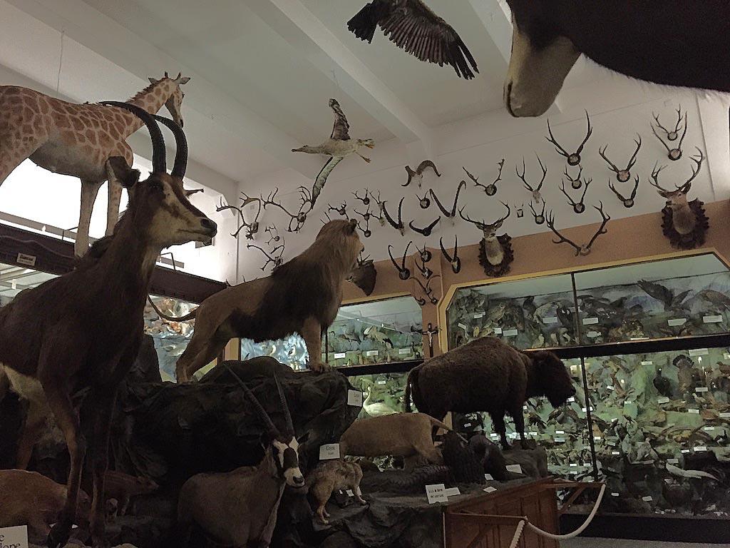 Een gigantische verzameling opgezette dieren uit alle uithoeken van de wereld.