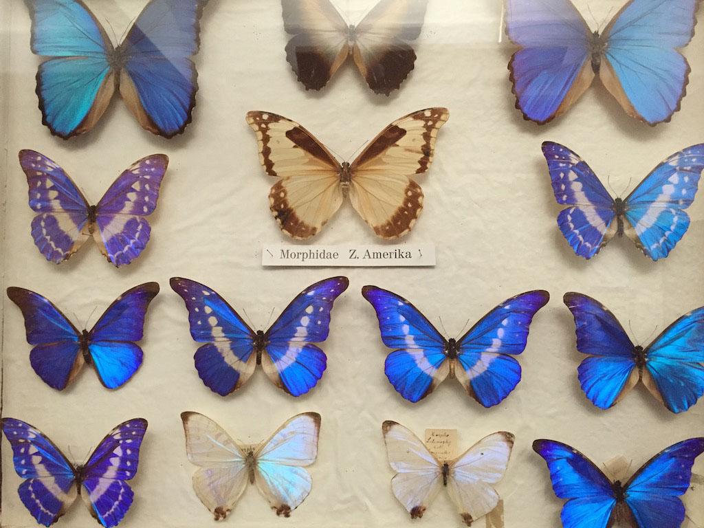 Prachtige kleurrijke vlinders in alle soorten en maten.