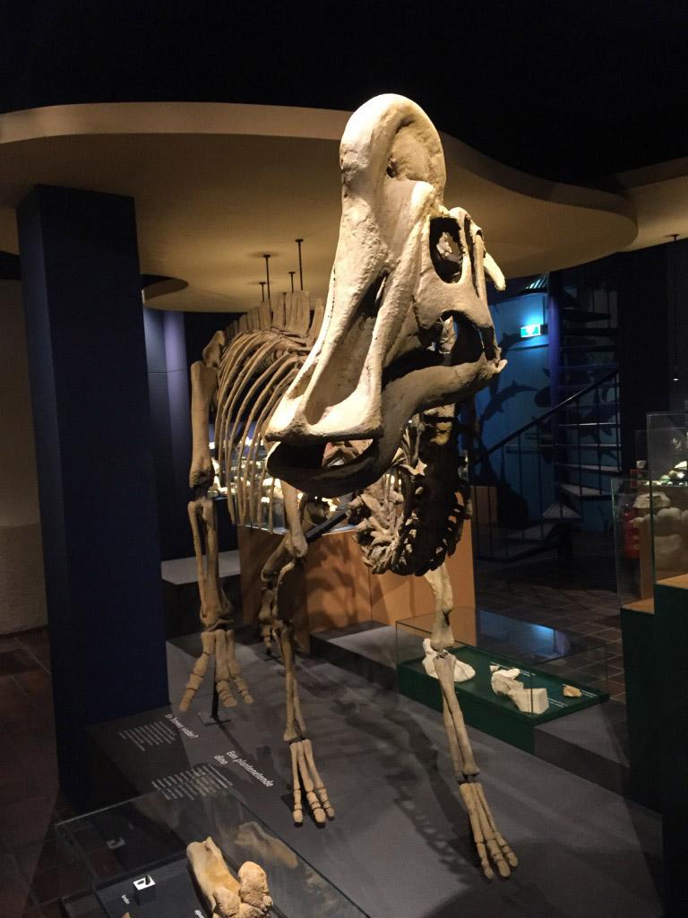 De Mosasaurus in het Natuurhistorisch Museum.
