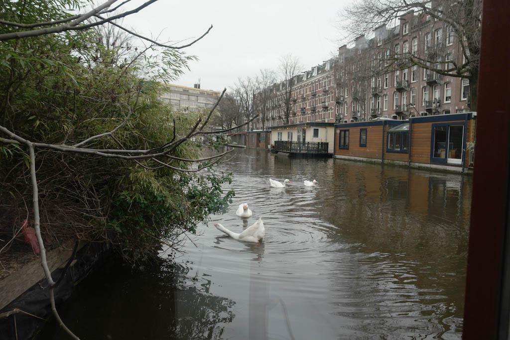 De ganzen zwemmen regelmatig naast de boot.