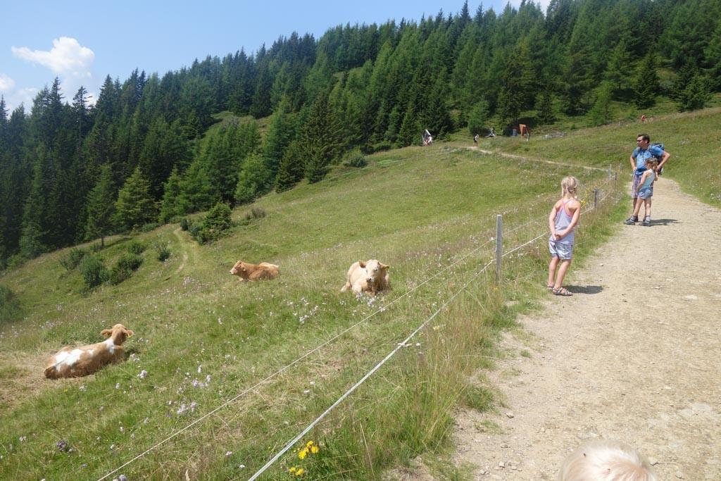 Onderweg komen we koeien tegen die we al van ver af hoorden vanwege hun bellen.