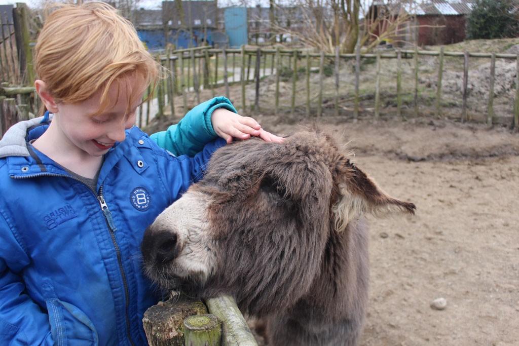 Vriendelijke ezels.