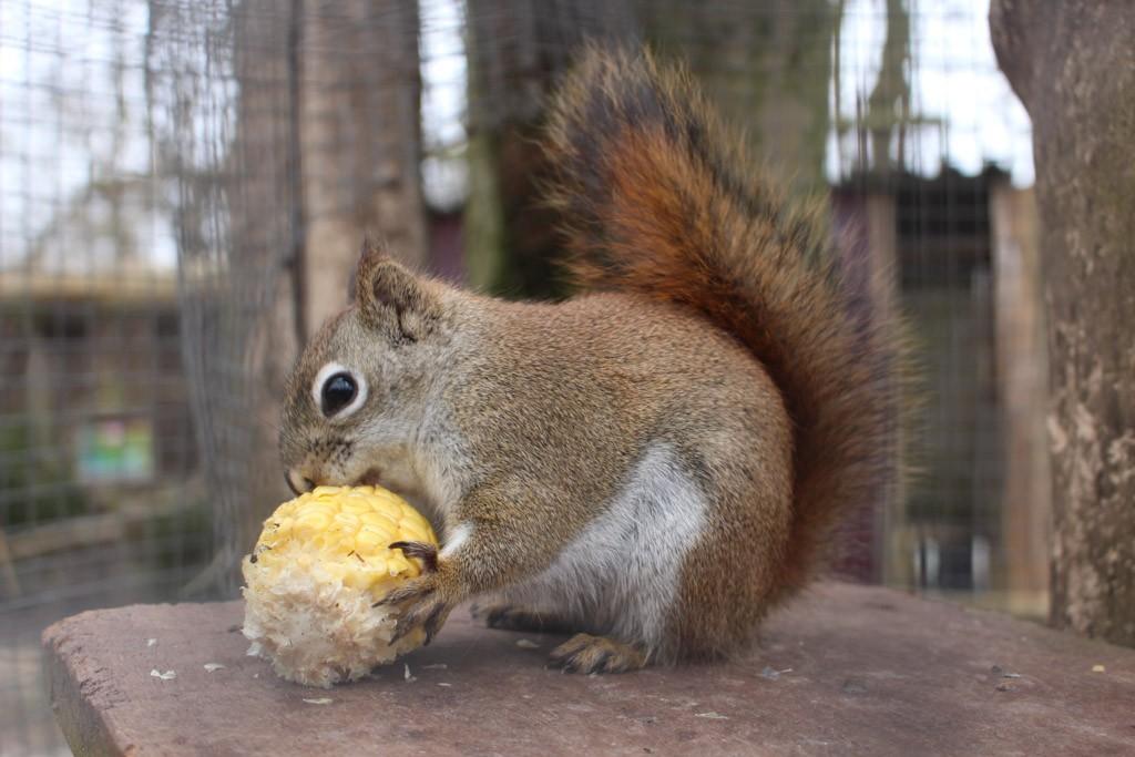 Deze eekhoorn was ook al voorzien van eten.