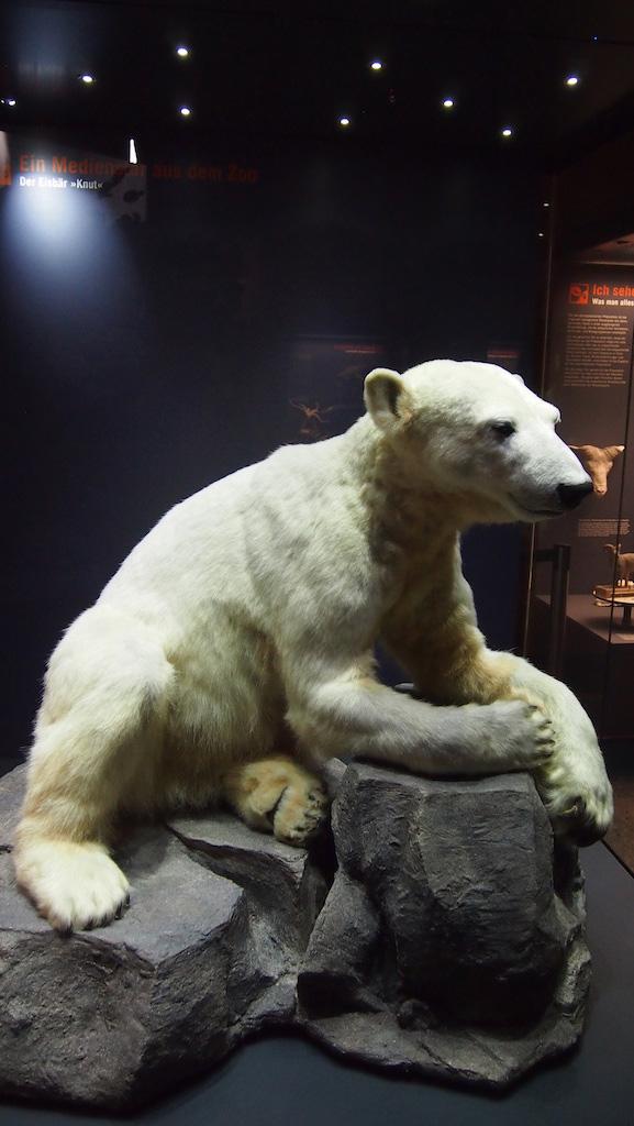 Kennen jullie 'm nog? Dit is het ijsbeertje Knut.