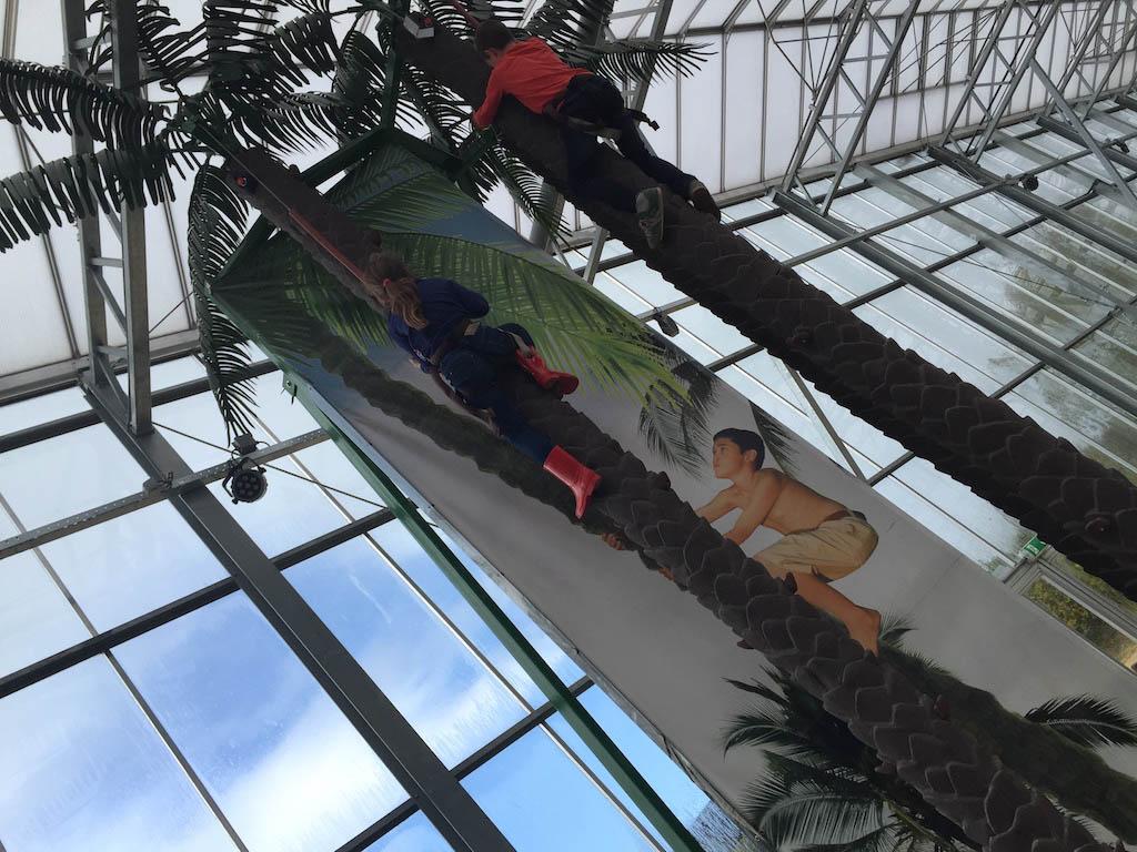 Maureen klimt zo de palmboom in.