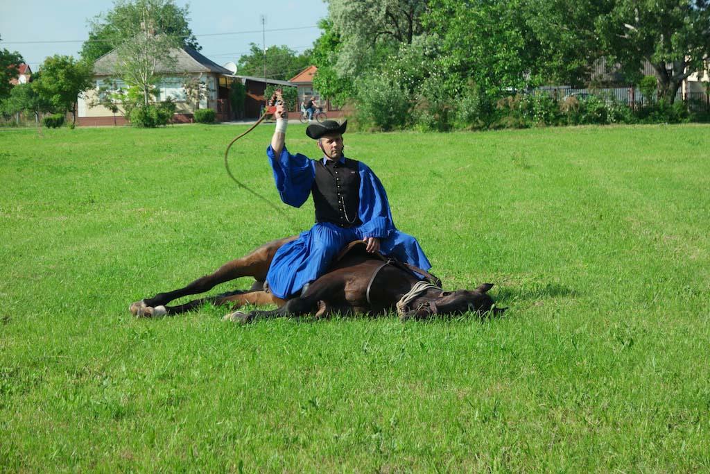 Het paard blijft rustig liggen, ook als er met de zweep wordt geknald.