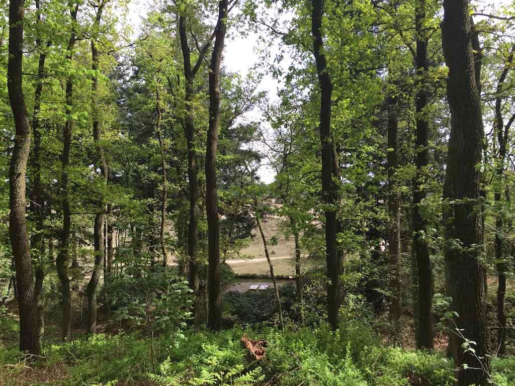 Zicht op het graf van het echtpaar, daar tussen de bomen.