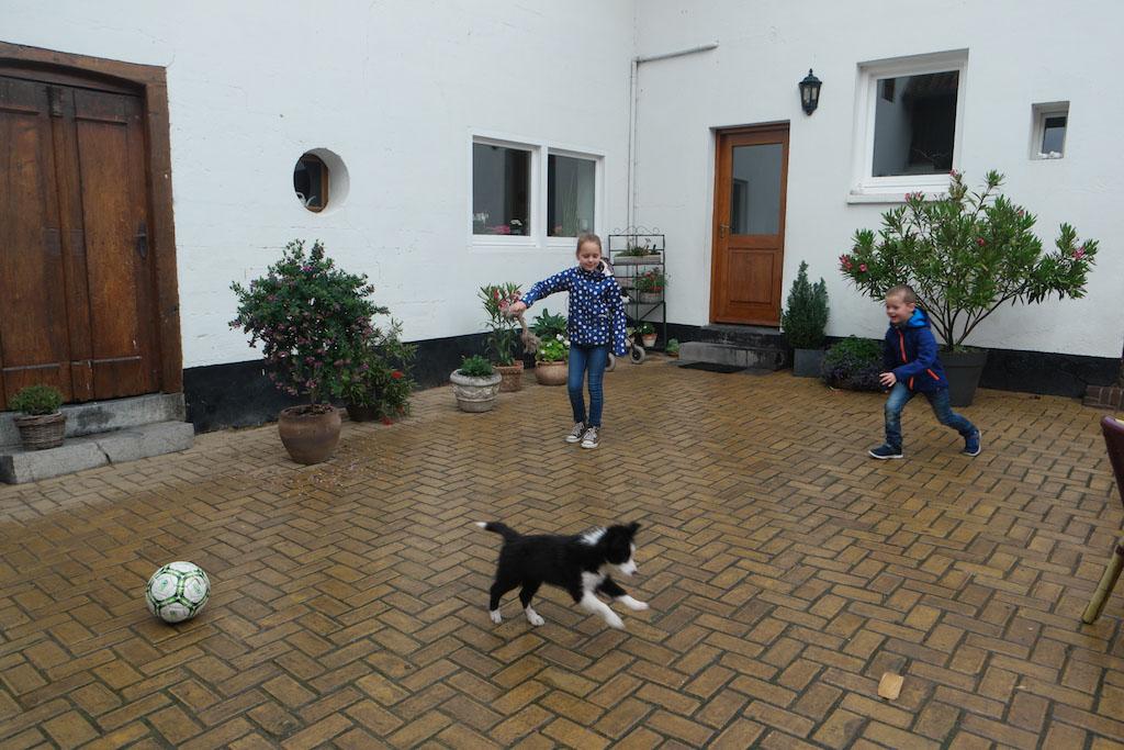 Spelen met puppy Sam.