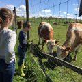Vers gras voor de koeien.
