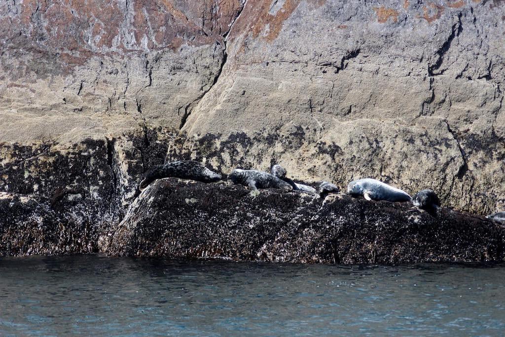 Zijn dat zeehonden?