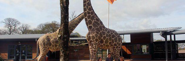 Fota Wildlife Park in Cork: naar de dierentuin in Ierland