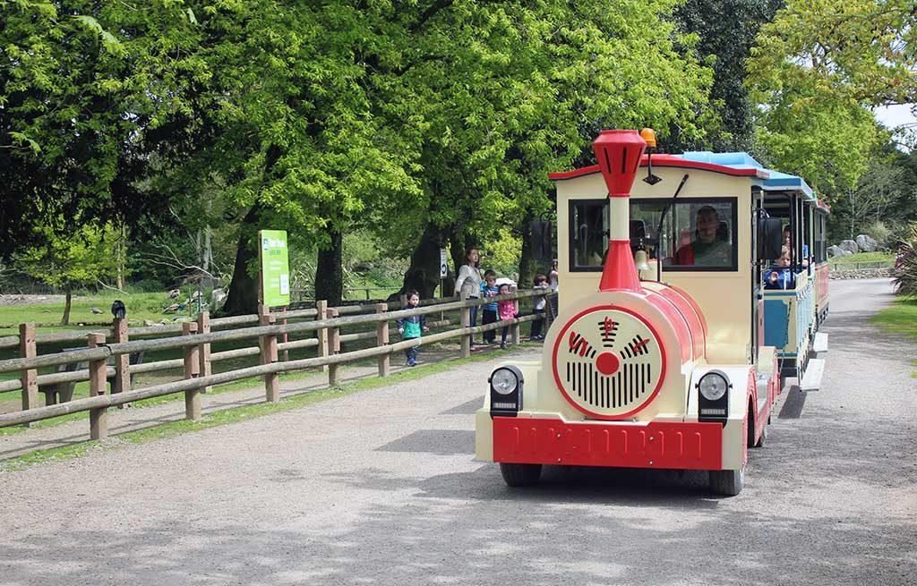 Je kunt ook met een treintje door de dierentuin.