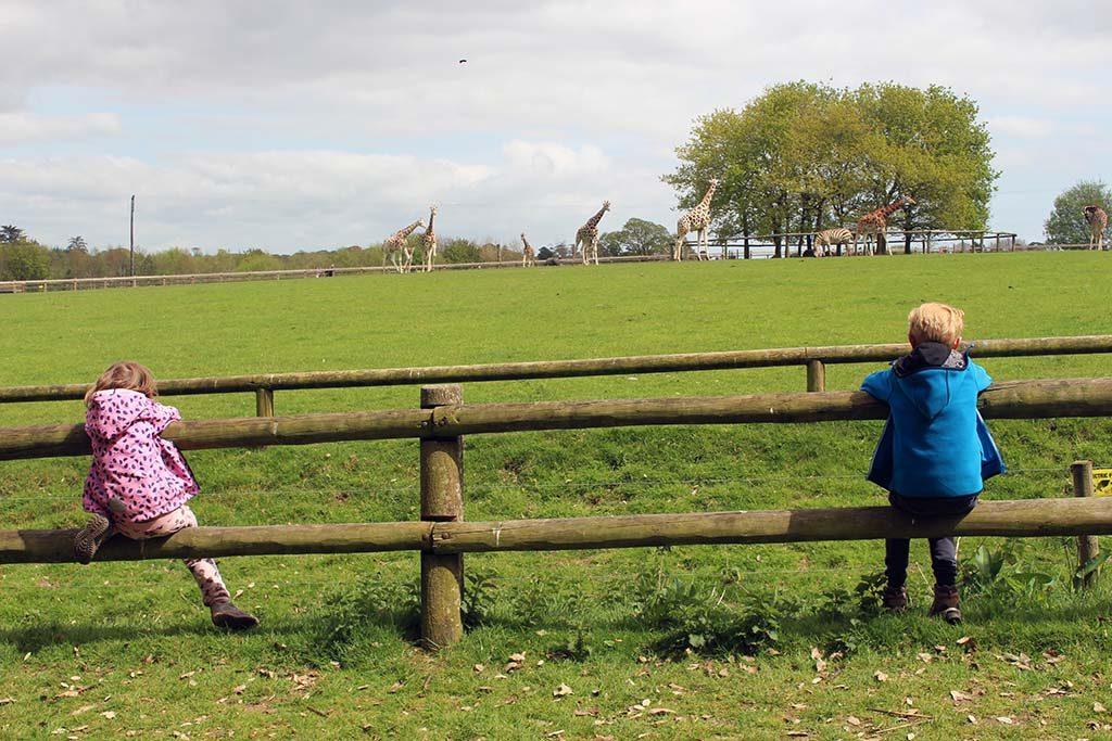 Safari op een groot groen grasveld.