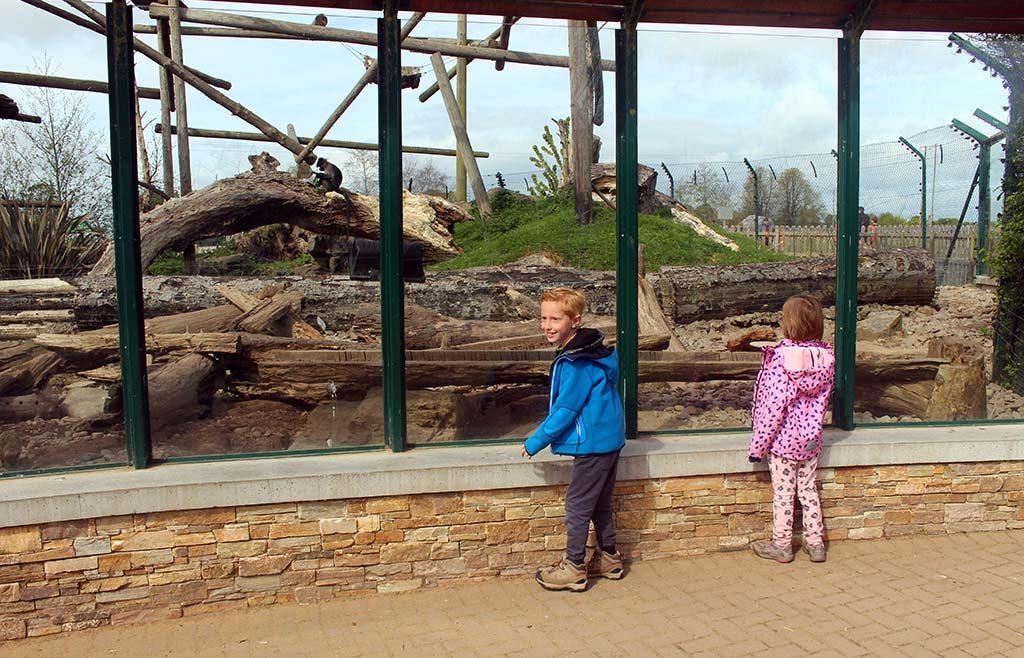 Aapjes kijken in Fota Wildlife Park in Cork.